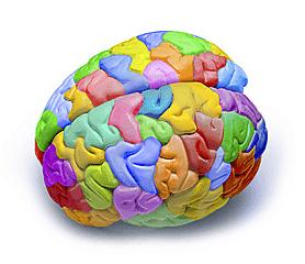 creativit-cervello